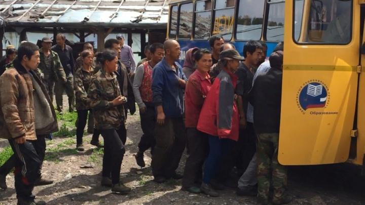 Из теплиц под Челябинском увезли в полицию сотню мигрантов