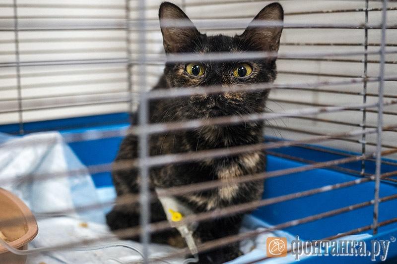 Кошка Лиана