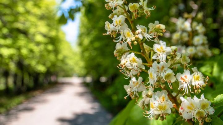В Самаре реконструкция ботанического сада начнется в этом году