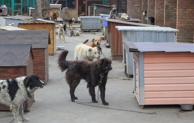 Виталий Кушнарев заявил, что в росте числа безнадзорных животных виноваты халатные ростовчане