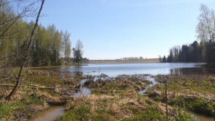 В Ярославской области утонул 16-летний мальчик