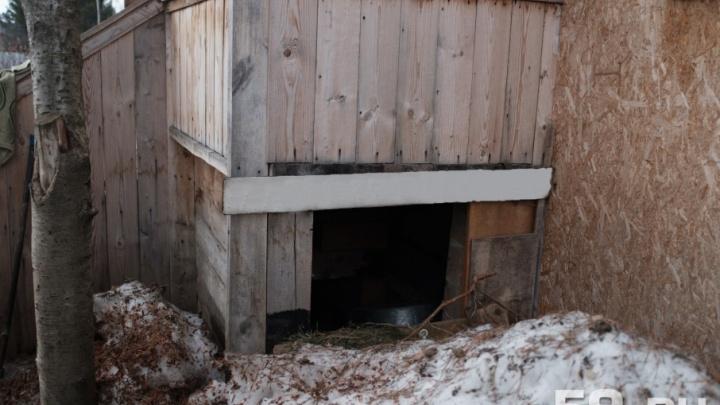 «Выкинул с балкона»: в Перми полицейские начали проверку после сообщения о жестоком обращении с животным