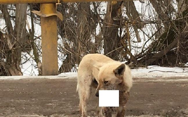 В Волгограде живодеры взорвали петарду в пасти собаки