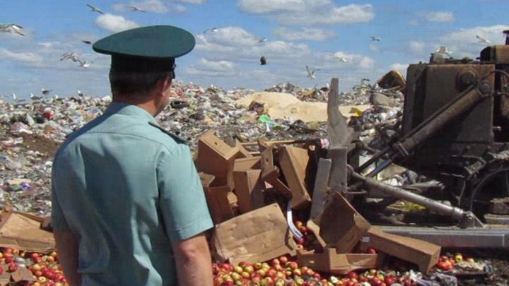 На Южном Урале 1600 килограммов польских яблок отправили под бульдозер