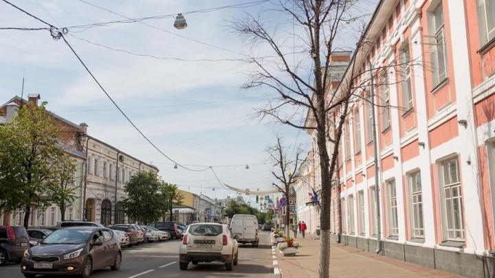 В центре Ярославля погибли липы: Горзеленхоз объяснил, почему