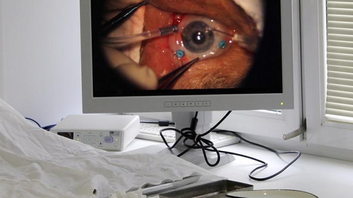 В России создан уникальный биоимплант для лечения глаукомы