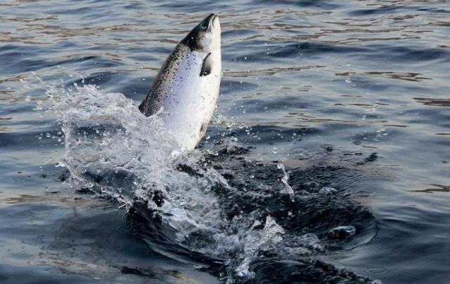 Ярославец оплатил четыре миллиона долгов наличкой, чтобы уехать на рыбалку в Норвегию