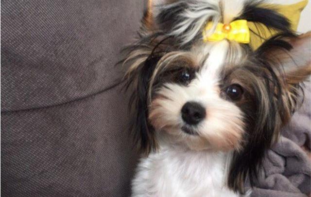 Кнопка «открыть двери» не работала: из-за проблем с лифтом в новостройке в Перми погибла собака