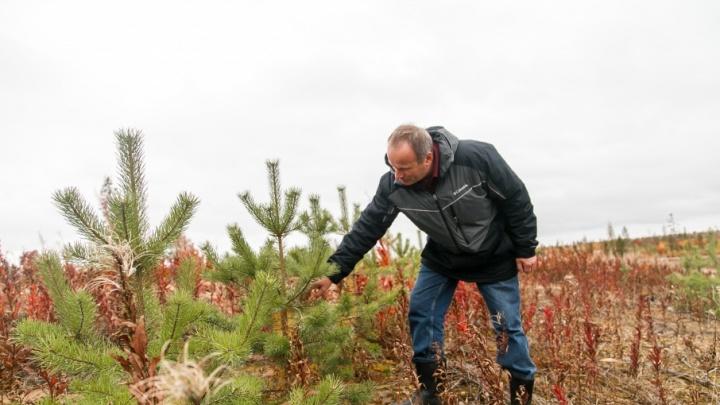 В 2017-м леспромхозы ГК «Титан» займутся воспроизводством лесов на территории более 13 тысяч га