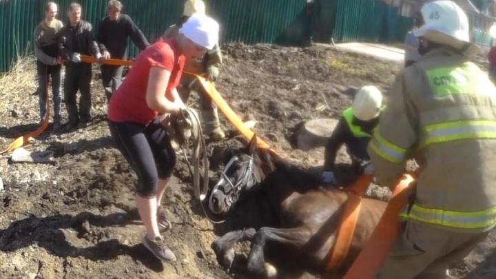 В Майской Горке спасли лошадь, оказавшуюся заложницей ямы на дороге