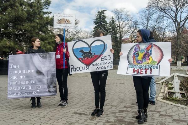 Ростовчане вышли на пикет, чтобы сказать «Нет» догхантерам