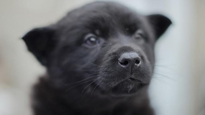 Приютите символ года: восемь брошенных псов из Катунино, которые мечтают найти хозяина