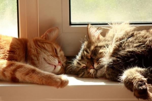 Без кота – жизнь не та! Фото Анны Худяковой