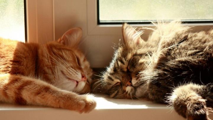Котиков много не бывает: читатели 74.ru поделились фотографиями своих питомцев