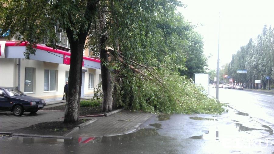 За опасные деревья на улицах отвечает администрация района, во дворах – управляющие компании.