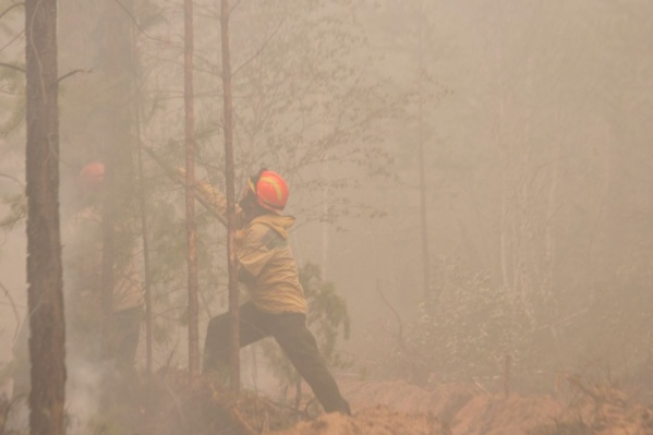Леса под Иловлей тушит элитный российский отряд авиапожарных