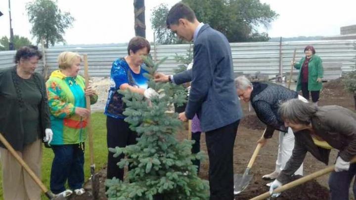 В Красноармейском районе Волгограда высадили голубые ели