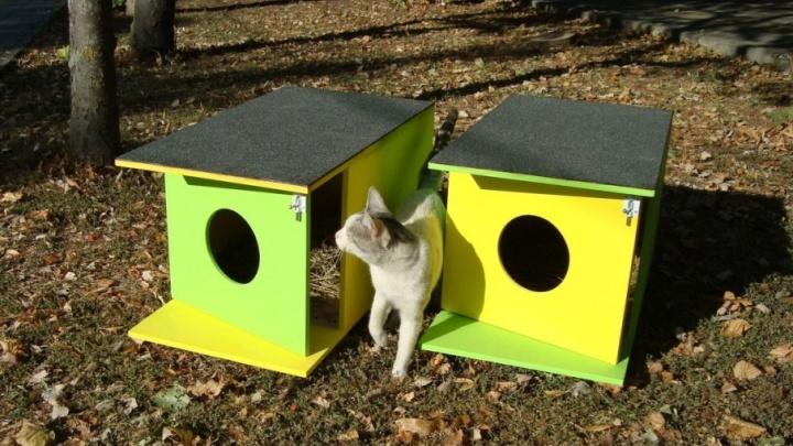 «Помоги коту»: ростовчане построили десять «мяудомиков» в разных частях города