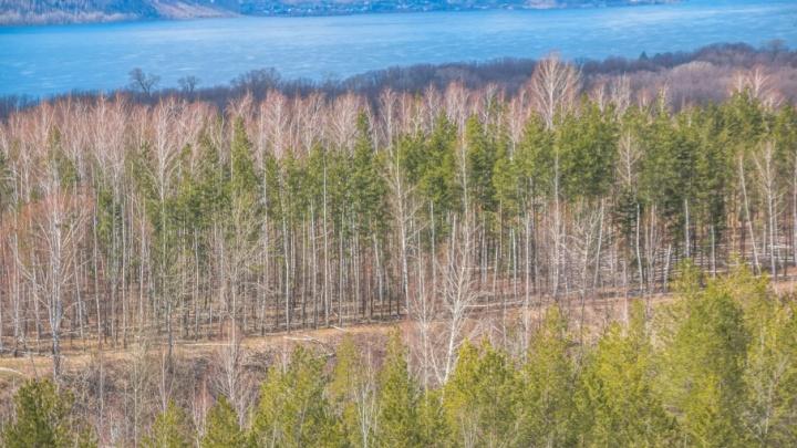 Есть риск возникновения пожаров: жителей Самарской области просят не ходить в лес