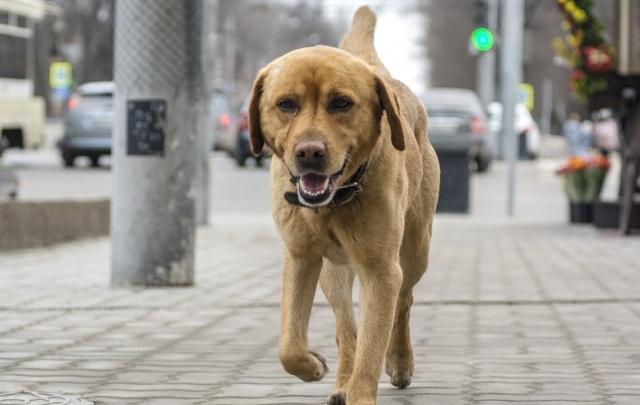 Ростовчане выберут, где появится новая зона для выгула собак