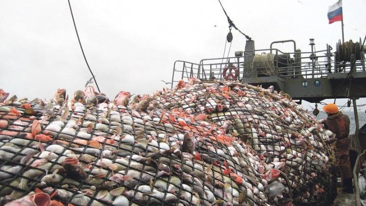 В Выборге построят рыболовное судно для Архангельского тралового флота