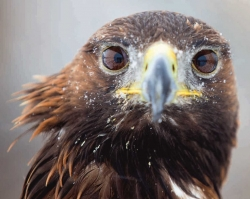 В Перми открывается фотовыставка «Природа смотрит на тебя»