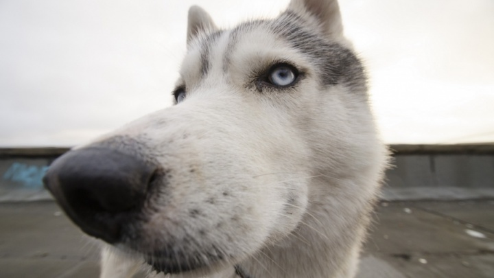 Дай, Джим, на счастье лапу: фото собак, которые были героями наших материалов в 2017-м