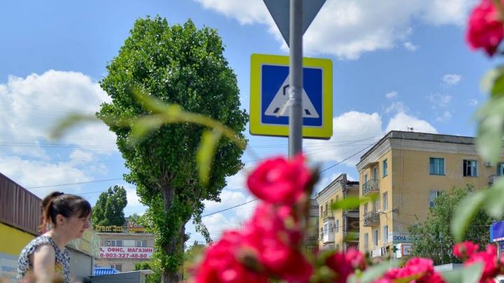 Волгоградский фотограф запечатлел цветы у взорвавшегося дома на Университетском