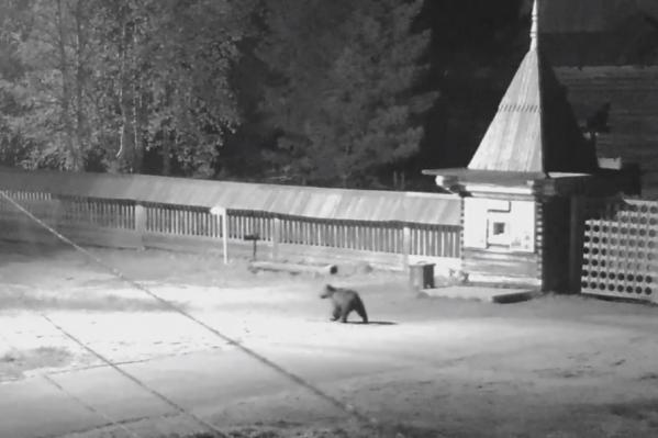 Медведь прогуливался около входа в музей