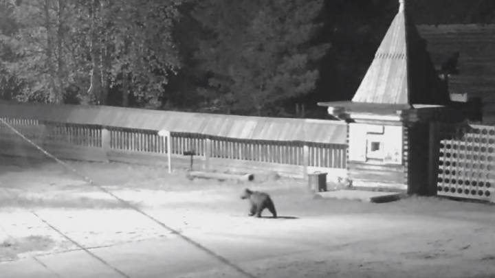 В музей Малые Карелы на ночную «экскурсию» пришел медведь