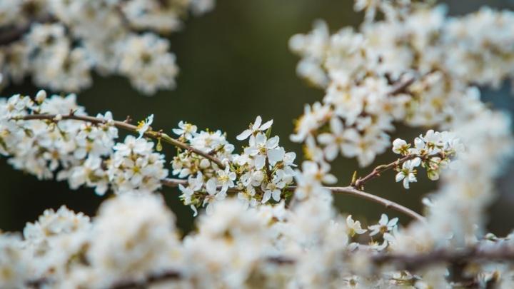 Откуда ветер дует: для аллергиков-ростовчан создали специальную карту