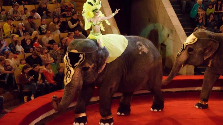 В Челябинском цирке открылось шоу слонов-великанов