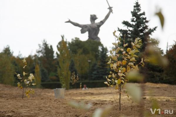 Деревья высадили в память о погибших железнодорожниках