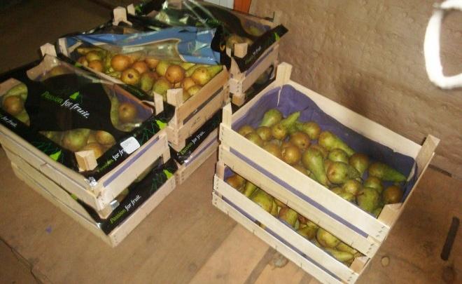 В Ярославской области на полигоне уничтожили почти сто килограммов санкционных груш