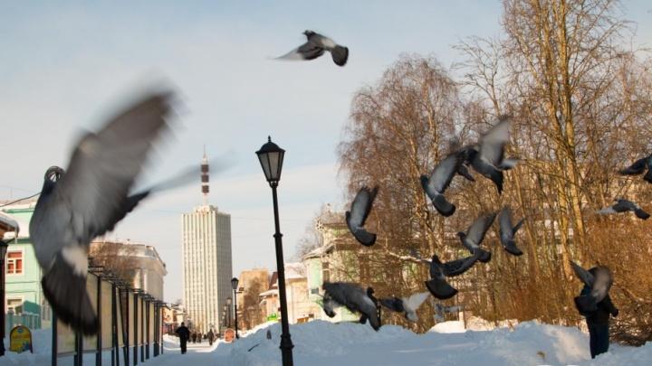 Хоть и март, а всё по классике: смотрим солнечные фотографии снежной архангельской весны