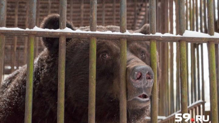Собака спугнула зверя: на жителя деревни в Коми округе напал медведь