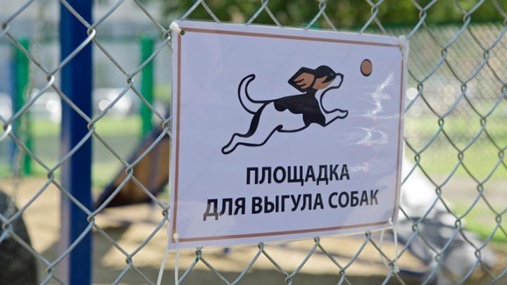 В Ярославле выбрали места, где можно будет гулять с собаками: адреса