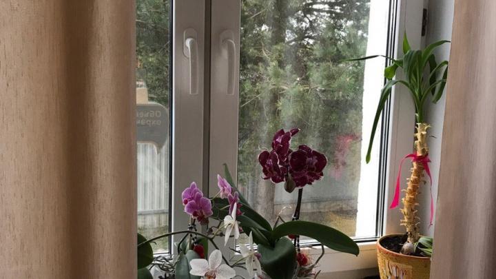 Сегодня в Ярославле откроется выставка орхидей