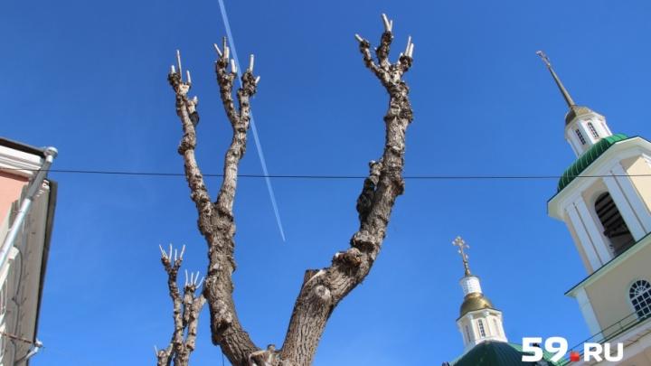 Куда пожаловаться на всё. Что делать пермяку, если на машину упало дерево, а ветки валяются по двору