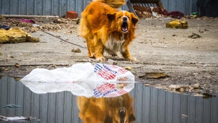 «Защищала гусят»: для покусанной собакой девочки в Миассе отсудили 15 тысяч рублей