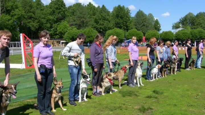 В Перми впервые пройдет чемпионат по собачьей тяжелой атлетике