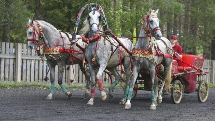 В субботу Вельск ждут рысистые бега и соревнования по конкуру