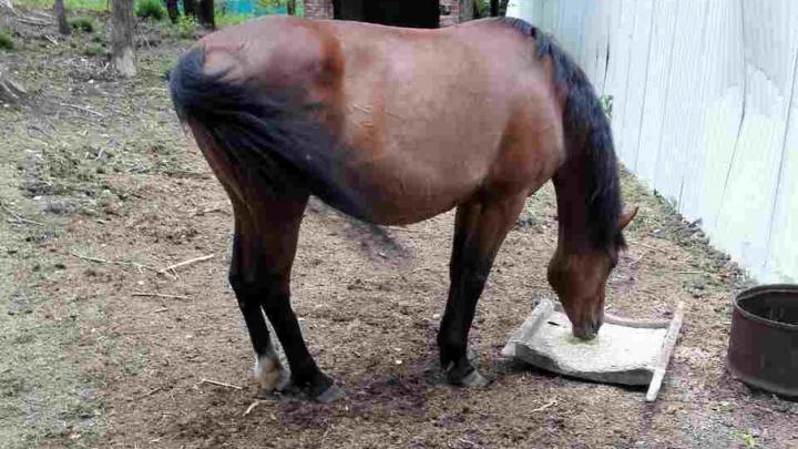 Природоохранная прокуратура проверила условия содержания лошадей казака Афанасьева: результаты выезда