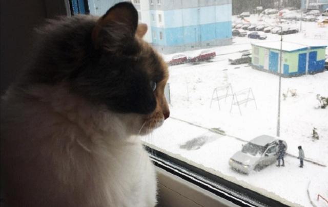 Лепили снеговиков и радовались сугробам: 20 лучших фото первой метели в Челябинске