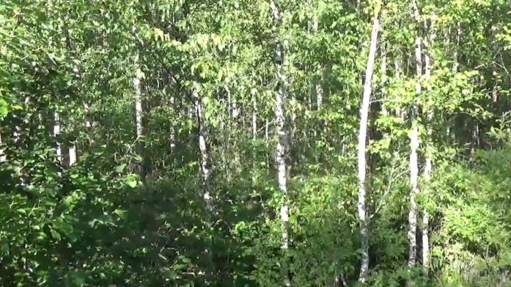 В Ярославской области охотники вывели обессилевшую женщину из леса