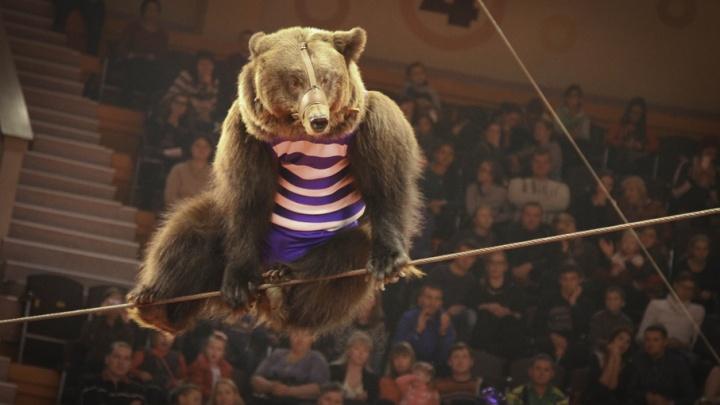 Билет на знаменитую на весь мир программу цирка можно купить вдвое дешевле