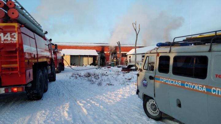 Было много дыма: в Прикамье волонтеры спасли 60 собак из пожара в приюте