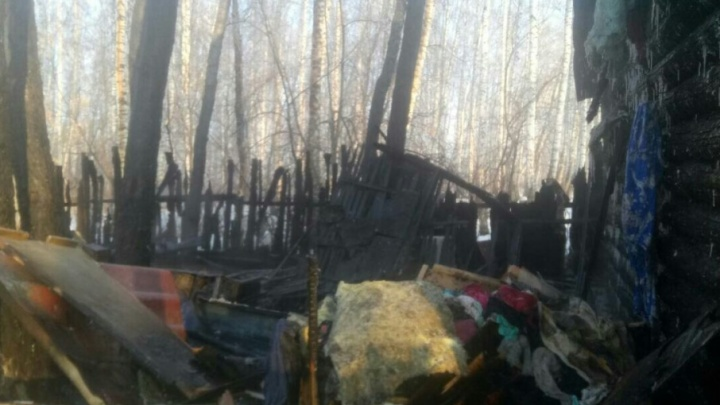 В Ялуторовске пожар уничтожил страусиную ферму, 180 птенцов и жилой дом