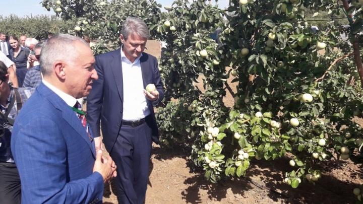 Главу Минсельхоза РФ Александра Ткачева угостили волгоградскими яблоками