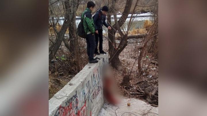 На нелегала, убившего хаски в Челябинске, завели дело о жестоком обращении с животными